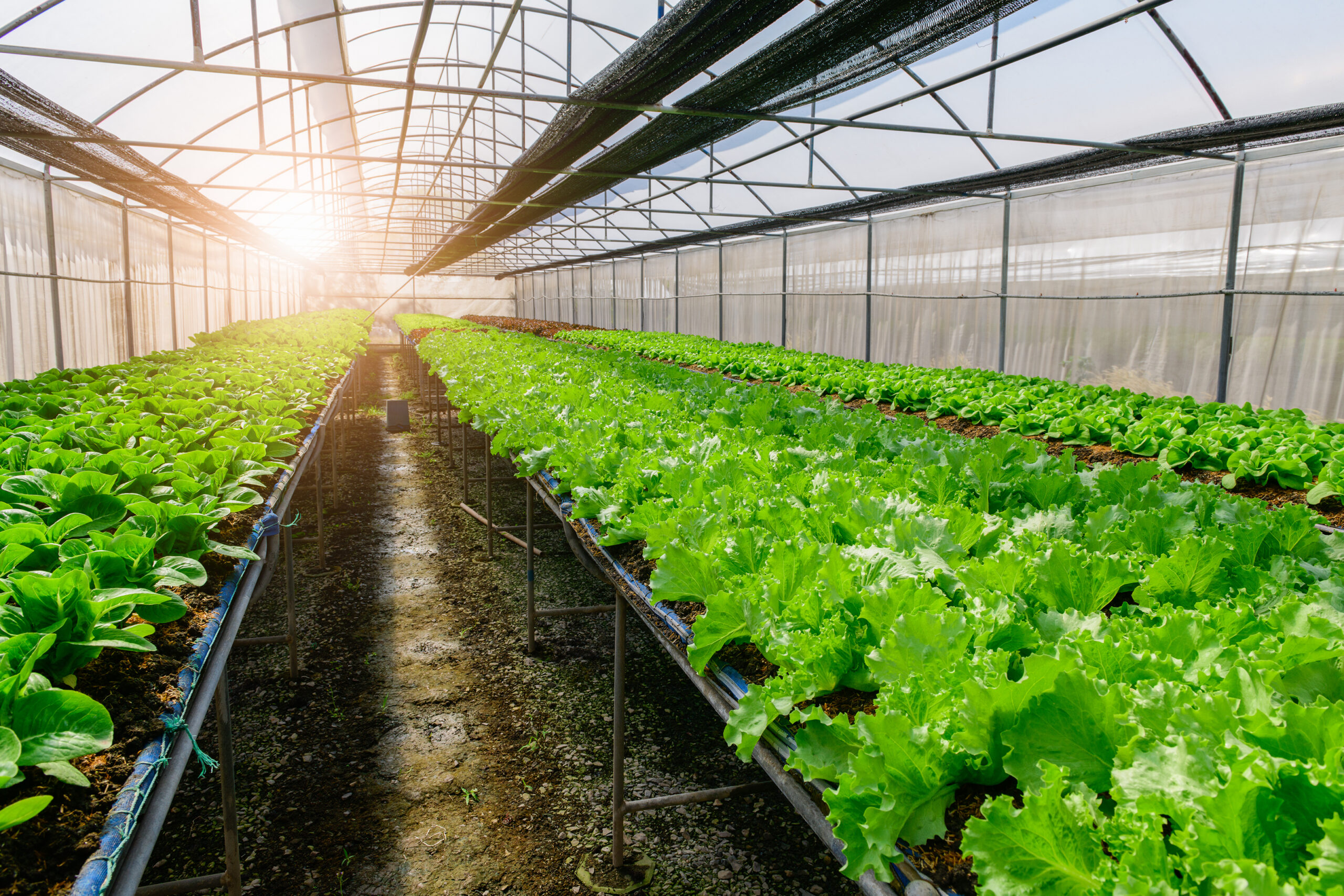 Αγροτική Τεχνολογία